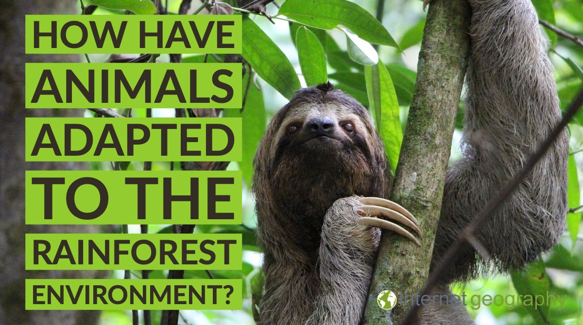 The students will research, write a report, create a powerpoint presentation, and present the powerpoint in class How Have Animals Adapted To The Rainforest Environment Internet Geography