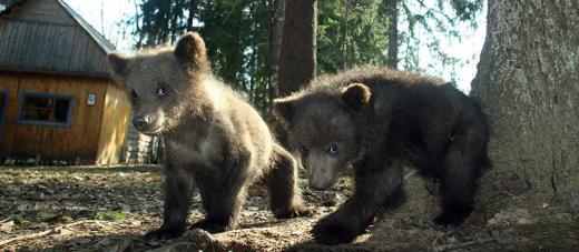 Bears Farm