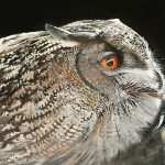 SnowyOwl_birds_painting