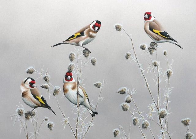 chris lodge_watercolor painting birds