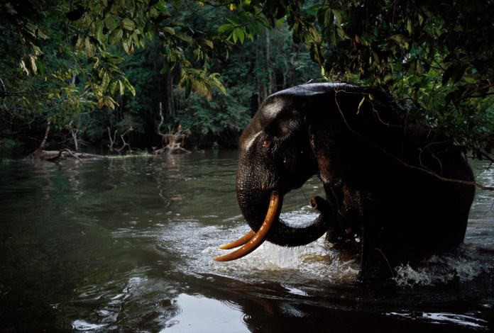 Elefant by National Geographic Wildlife Photographers