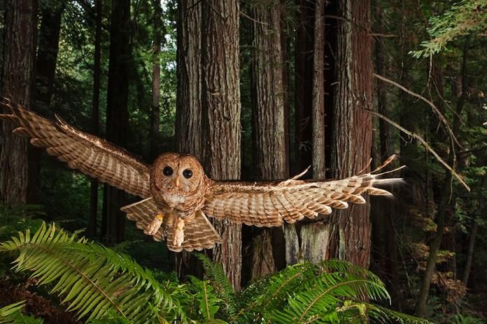 Michael Nichols - National Geographic Wildlife Photographer