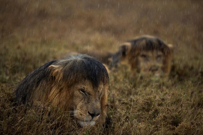 Wild Animals by National Geographic Wildlife Photographers _1