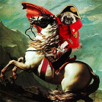 The pug dresses as our best-known historical characters