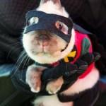 Halloween pets costume (1)