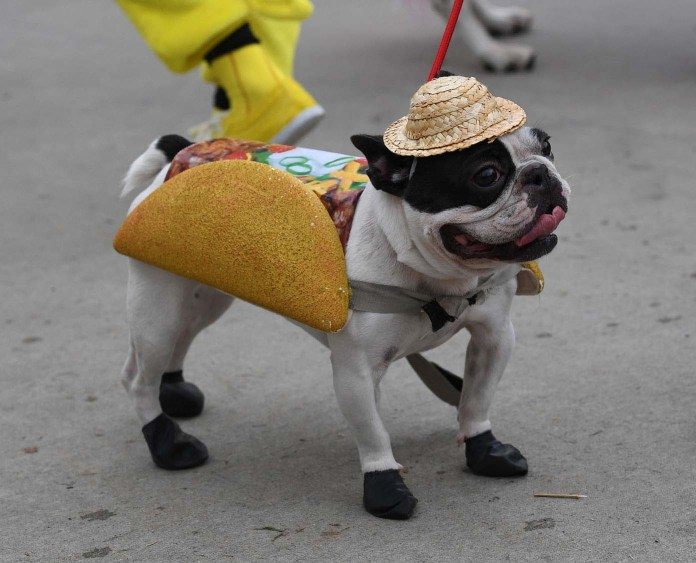 Dogs dressed in Halloween costumes are displayed during the annual Haute Dog Howl'oween parade in Long Beach