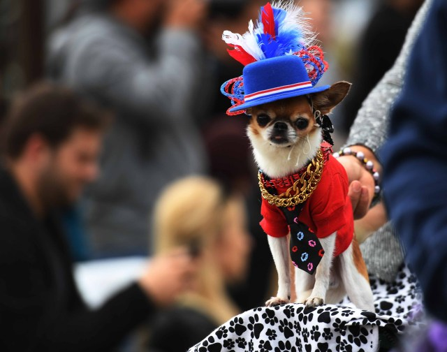 Dogs dressed in Halloween costumes