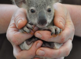Cute-Tiny-Animal-Pictures-baby animals