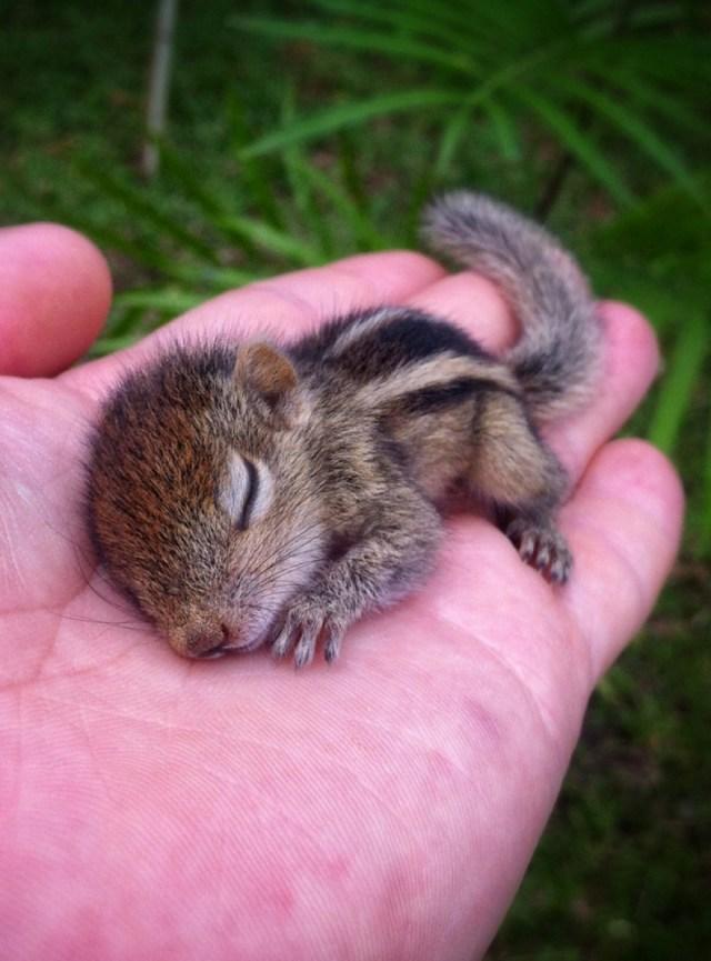cute animals_s