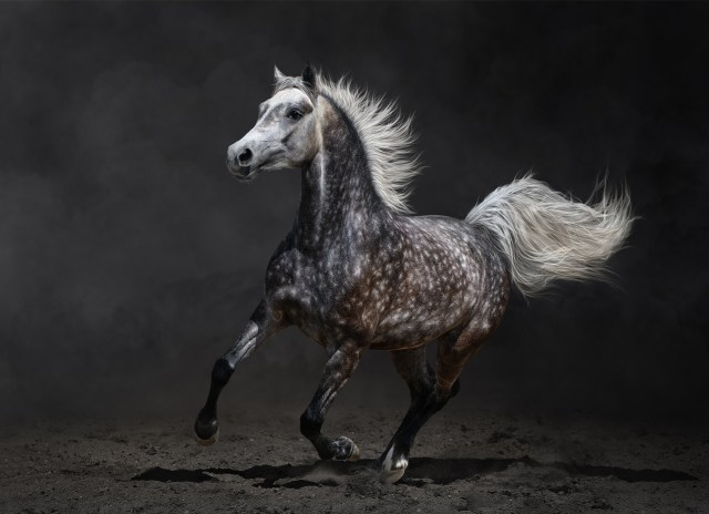 Beautiful-Wild-Horse-Horses Photography