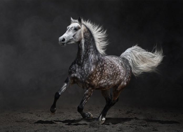 Beautiful-Wild-Horse-Horses Photography