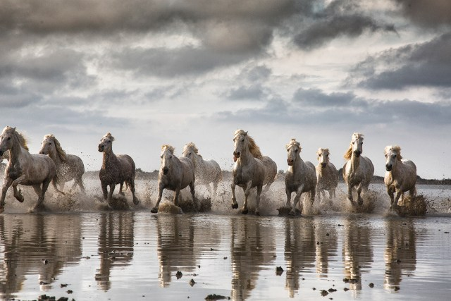 Horses Photography-Scott Stulberg
