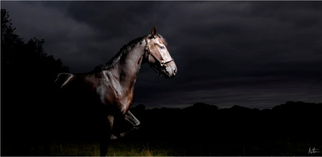 Horses Photography_Matthew Seed22