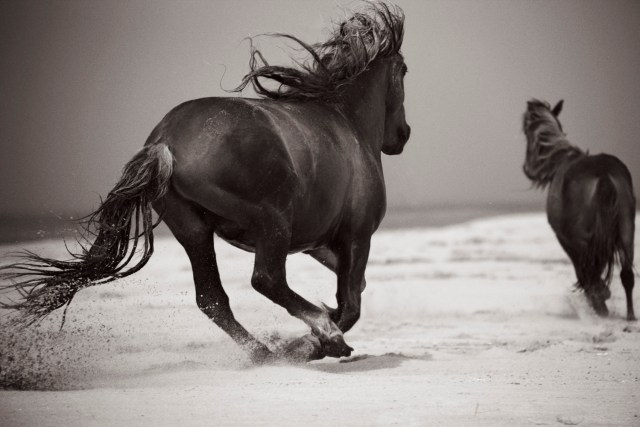 Horses_Photography Drew Doggett