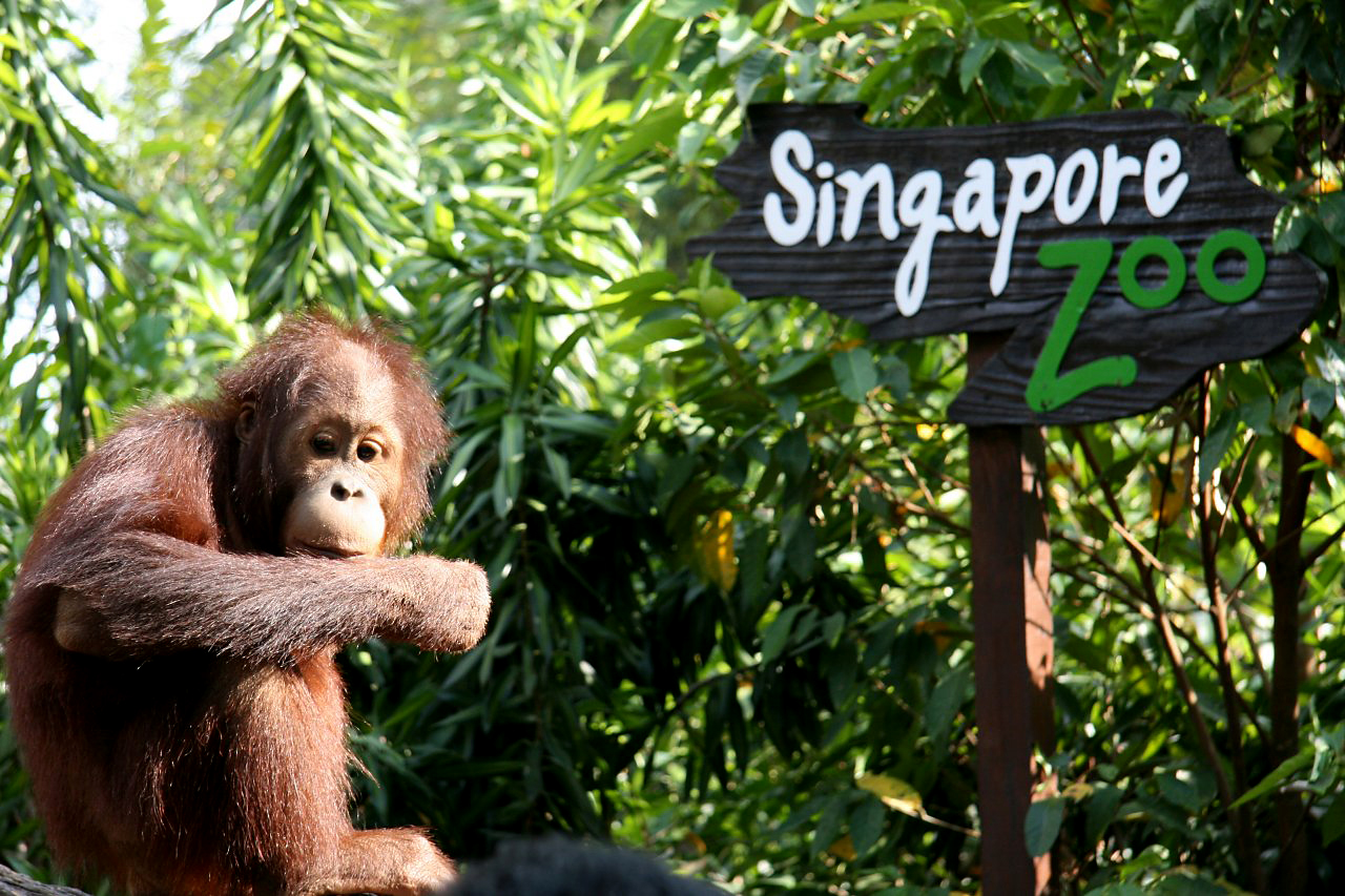 Pictures_and_Singapore_Travel_Tips (10)