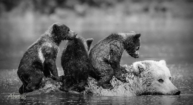 """""""MOMMA BEAR"""" by TAlcatraz"""