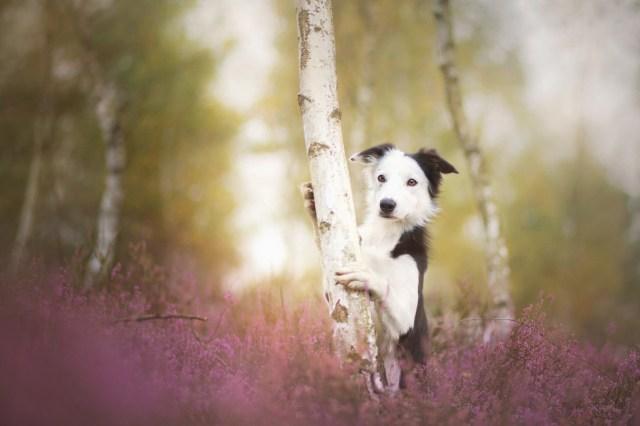 Dog Portraits Photography by Alicja Zmysłowska (5)