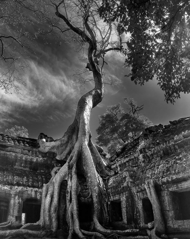 Famous_Photographs_of_Trees_by_Beth_Moon (14)