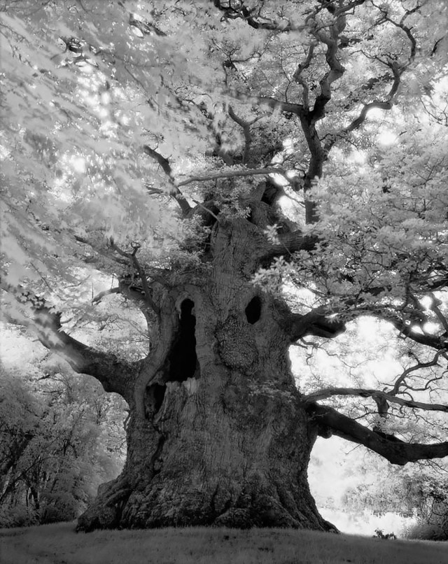 Famous_Photographs_of_Trees_by_Beth_Moon (20)