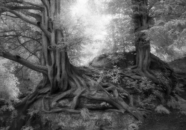 Famous_Photographs_of_Trees_by_Beth_Moon (22)