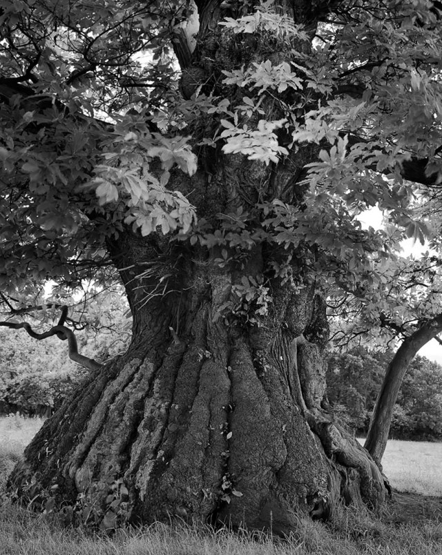 Famous_Photographs_of_Trees_by_Beth_Moon (26)