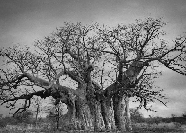 Famous_Photographs_of_Trees_by_Beth_Moon (28)