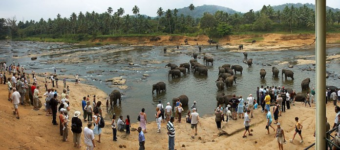 Pinnawala Elephant Orphanage_3