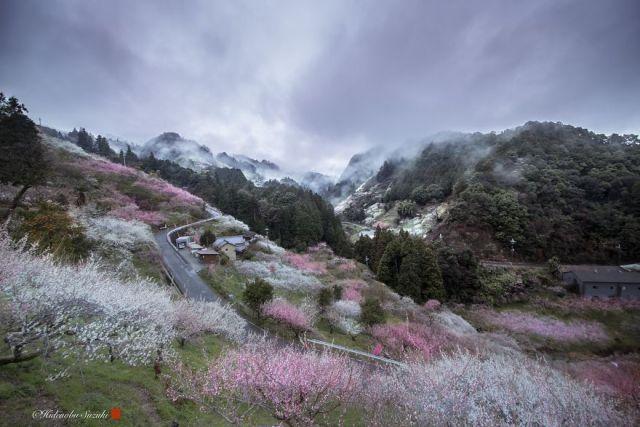 Sakura blooming Photography by Hidenobu Suzuki