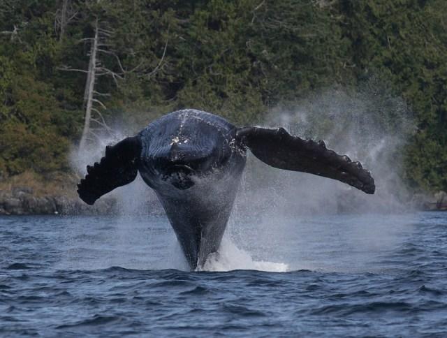 Johnstone Strait, British Columbia, Canada _ travel insurance