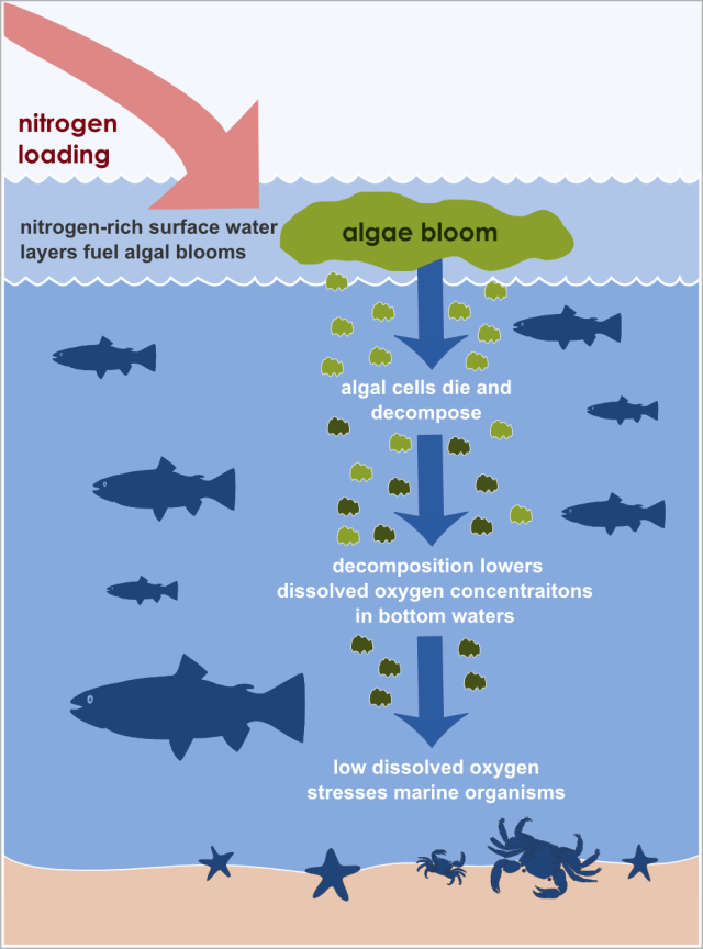 why some fish needs to leave the water