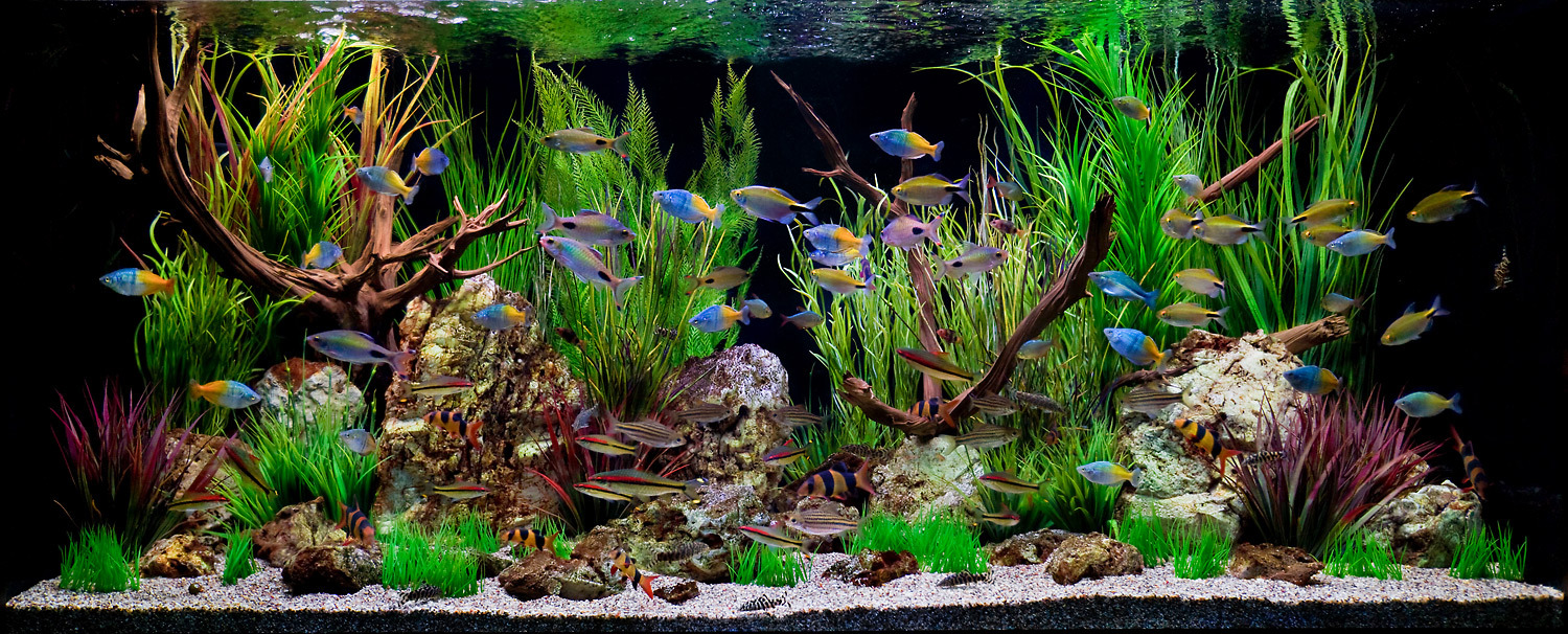 14 Fishes to Keep in Your Home Aquarium