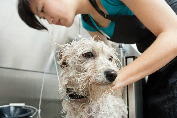 best dog whitening shampoo