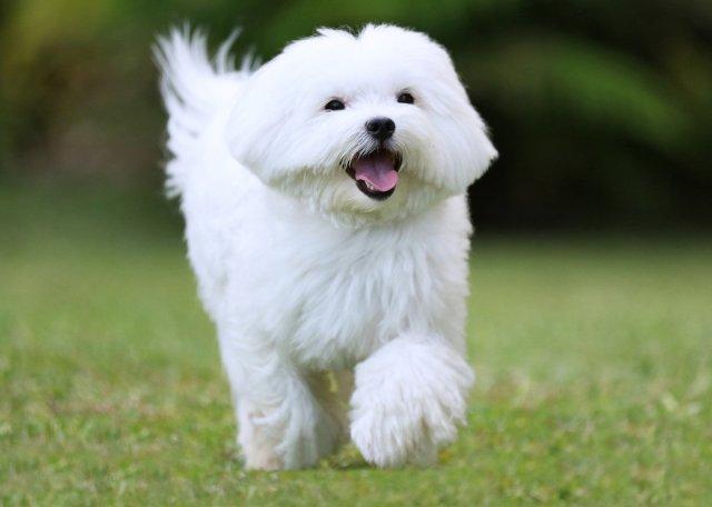 best dog whitening shampoo_1