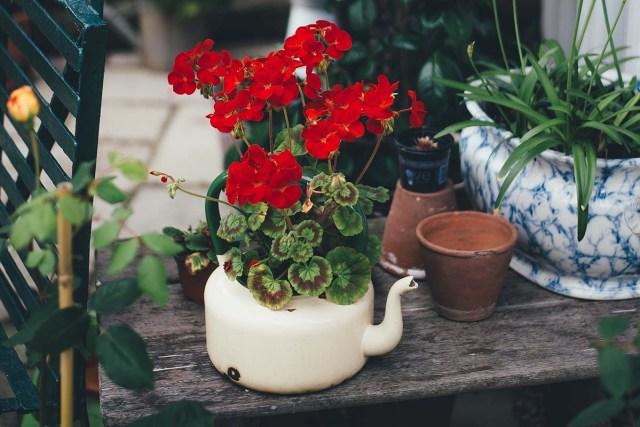 the benefits of gardening on health