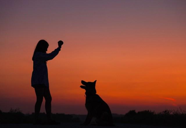 dog to training classes
