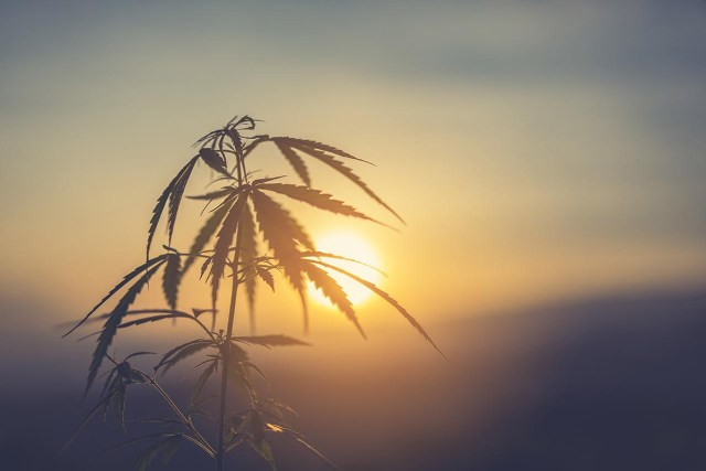 How Can CBD Help With Insomnia