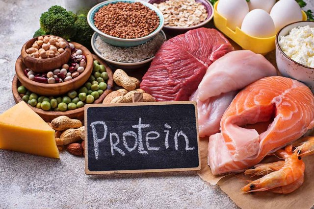 The role of protein in the body