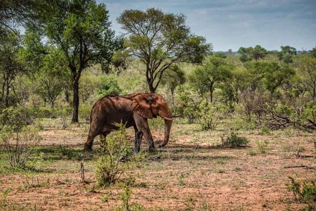 Kruger National Park- South Africa