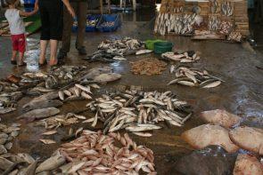 Gazan Fish Market, Palestine 2010