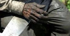 CNBB Estado brasileiro fecha os olhos para trabalho escravo
