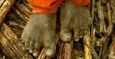 MPT e MPF pedem revogação da portaria que dificulta combate ao trabalho escravo