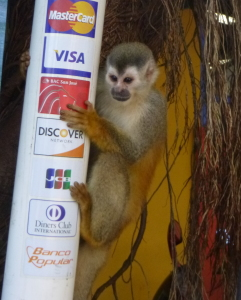 "The ""rare"" and ""elusive"" squirrel monkey"