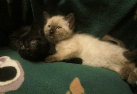 The Internet was practically made for kitten pictures.