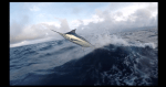 Video: Costa Rica Sea Mounts with Sea Fly