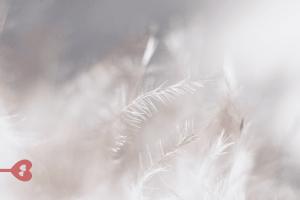 Aphrodisia – Agapē