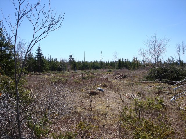 Our cleared homestead site