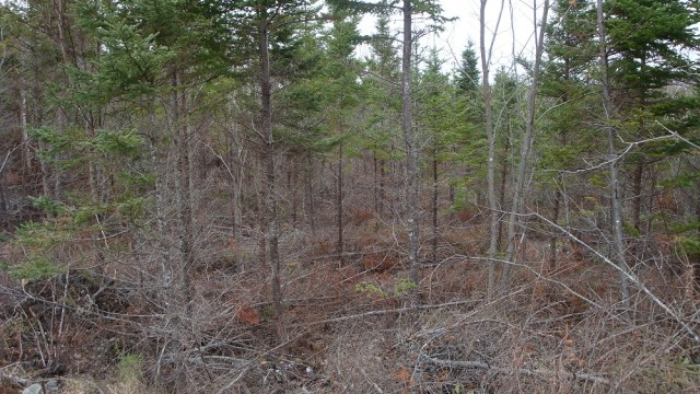 Properly Thinned Forest