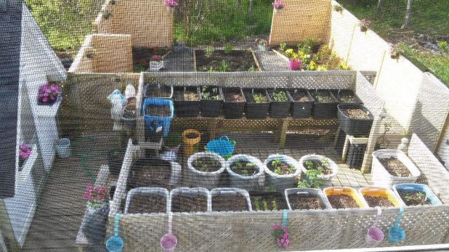 Elevated Easy on Back Container Garden (courtesy Margaret Booth)