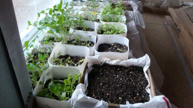 Transplants in Containers