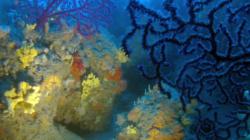 corallo-2016-12-28-16h59m25s165